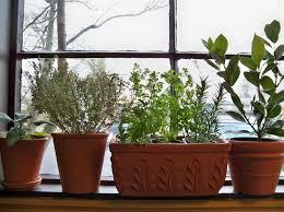 indoor herb garden kits to grow herbs indoors hgtv herbs portland nursery