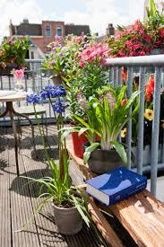 kleine balkone wenig platz viel sommerfeeling die passenden zwiebelblü für
