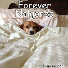 Memes De Nalgones - hacer memes negro meme de forever nalgones