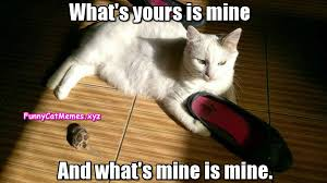 What Is S Meme - what s mine is mine funny cat memes