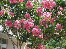Small Shrubs For Front Yard - best trees to grow curb appeal