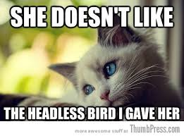 Sad Cat Memes - sad cat is sad 25 hilarious first world problems cat meme