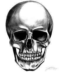 free skull free clip free clip on clipart library