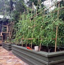 houseplant trellis 53 tomato trellis designs completely free