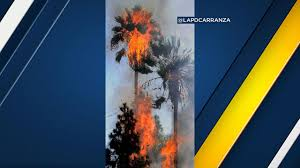 Flag On Fire Suspect Arrested For Setting Van Nuys Palm Tree On Fire Dancing