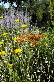 xeriscape gardening with the summerland gardens