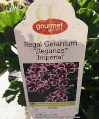 plant database forum elegance geraniums garden org