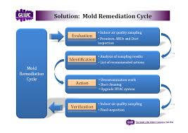 mold remediation great water company