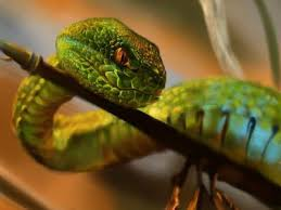 a green snake wallpapers snake wallpaper page 3