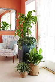 house interior with wall mirror and house plants watering your