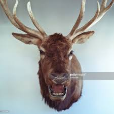mounted deer head on a wall stock photo getty images