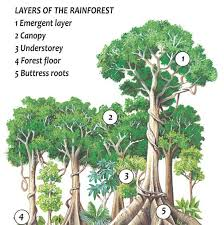 Adaptations Of Tropical Rainforest Plants - tropical rainforest q files encyclopedia