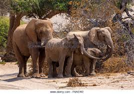 elephants holding trunk stock photos elephants holding trunk stock