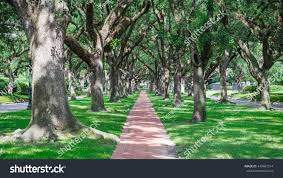 panorama view archway made live oak stock photo 449487514