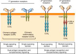 efficacy and toxicity management of car t cell immunotherapy a