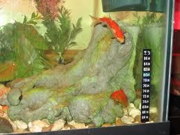 tank mates for your turtle b u0026 h u0027s turtle site