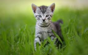 exotic animals baby animals cats cat kitten kittens cute exotic animal pictures