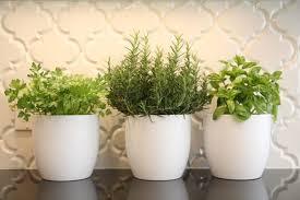 plante aromatique cuisine cultiver plantes aromatiques et salades mode d emploi