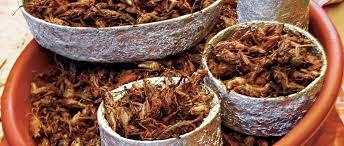 insecte cuisine 8 insectes utilisés dans la cuisine mexicaine