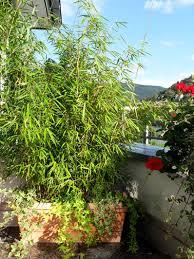 bambus fã r den balkon chestha dekor pflanzen balkon