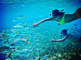 Delaware snorkeling images 25 best picturesque places for snorkeling world jpg