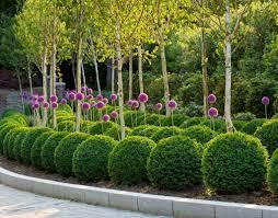 Olive Garden In Little Rock by Best 25 Small English Garden Ideas On Pinterest Cottage Gardens