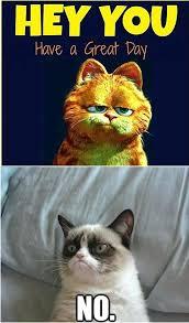 Grumpy Cat New Years Meme - grumpy cat landscape garden city hotel new years eve flyingangels club