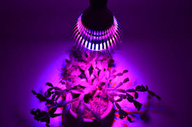 amazon com led grow lights for indoor plants 27w best for