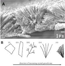 geochemical perspectives on coral mineralization reviews in
