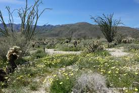 Anza Borrego Wildflowers Super Bloom by Anza Borrego Desert State Park U2013 Part 2 Including The Slot A