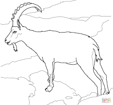 free coloring pages goats wild goats coloring pages free coloring pages