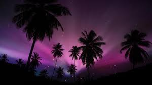 tropical purple sunset full hd wallpaper and background