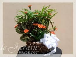 planter u0026 fresh cut carnations flower arrangement le jardin florist