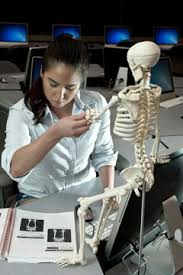 Anatomy And Physiology Nervous System Study Guide Accredited Anatomy And Physiology Classes Online Anatomy And