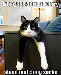 Funny Meme Cat - funny cat memes reasons you should fall in love with your funny cat