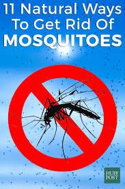 8 best natural bug spray images on pinterest pest control