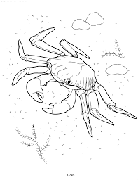 water animals pictures for colouring