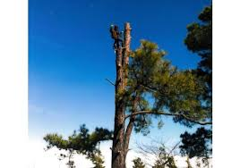 bbb business profile phillips tree service