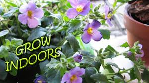 Low Light Indoor Flowers Grow Flowers Indoors Youtube