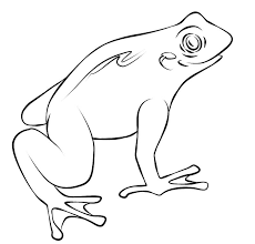 Slimmy Frog Coloring Page Slimmy Frog Coloring Pages Color Frog Colouring Page