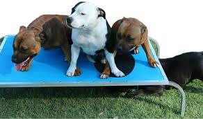 virtually indestructible dog trampoline beds