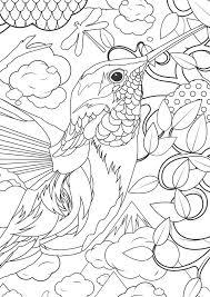 humming bird coloring page kids coloring