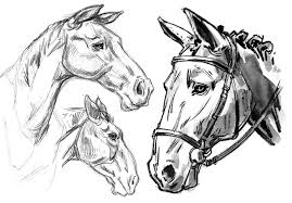 mustang horse drawing garygeraths animal drawing