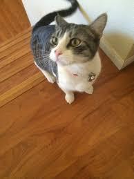 my cat name beck anime amino