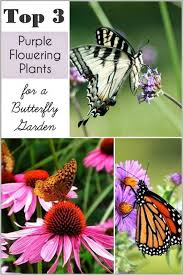 137 best plants images on pinterest gardening flowers and