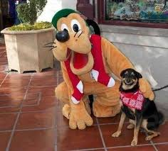 Happy Dog Meme - happy dog meets pluto meme guy