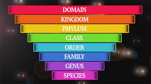 classification flocabulary