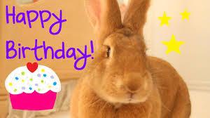 rabbit birthday flemish rabbit s birthday