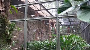 unique backyard bird aviary architecture nice