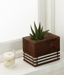 succulent plant by better homes and gardens at from you flowers